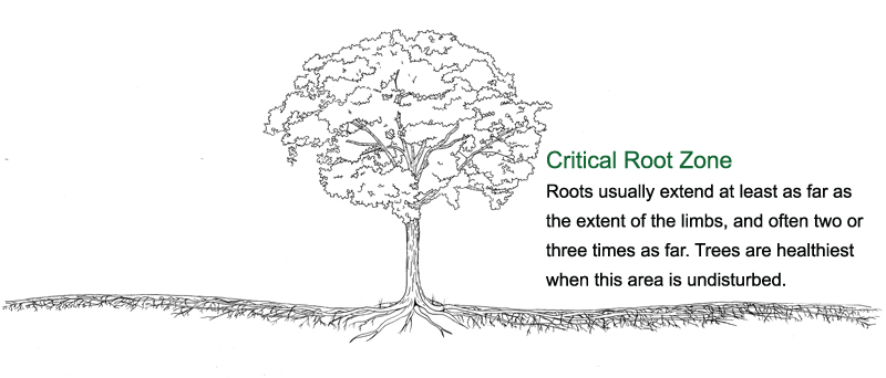 Root-zone-final